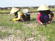 Le delta du Mékong à l'épreuve du climat