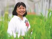 La scientifique qui fait pousser le riz dans l'eau salée