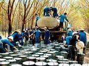 Le Vietnam exporte plus de 841 millions de dollars de caoutchouc