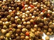 Des exploitants vietnamiens du poivre aux Pays-Bas