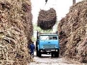 La production nationale de sucre est insuffisante
