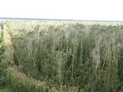 Renforcement de la protection des forêts spécifiques