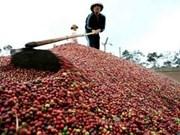 Les exportations de café atteindraient 2 mds de dollars cette année