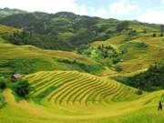 Les rizières en terrasses attirent les touristes