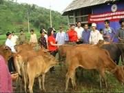 Une banque de vaches en faveur des pauvres