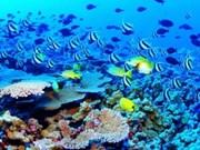 Vidéoconférence sur la préservation de l'écosystème marin