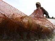 Les crevettes conservent leur réputation au Japon
