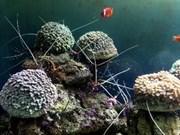 L'enquête des ressources et de l'environnement maritimes se poursuit