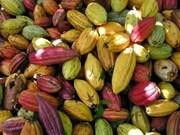 À Hanoi, sur les pistes du cacao du Venezuela