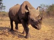 Interdiction de l'import-export de spécimens d'animaux sauvages