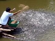 Asie-Pacifique: pour un réseau d'élevage aquacole durable