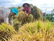 Conférence sur la riziculture dans le delta du Mékong