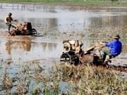 Agriculture : An Giang va coopérer avec les localités du Mozambique