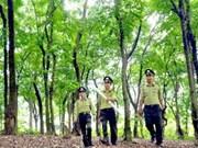 Forum de dialogue sur les politiques de gestion durable des forêts