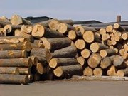 Objectif de 5,5 milliards de dollars d'exportations de bois et de produits forestiers en 2013