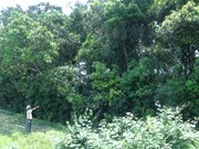 Áo Quan cho et l'histoire des rangées d'arbres inédites