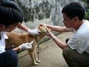 La FAO assistera Yen Bai dans la lutte contre la rage
