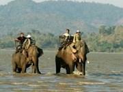 Près de 280 mlds de dongs pour la protection des éléphants