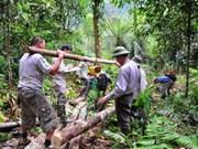 Estimer la biomasse forestière et les stocks de carbone