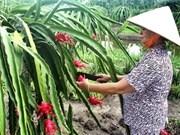 Pitaya : aide néo-zélandaise pour Tien Giang