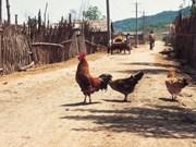 Cambodge : un nouveau décès dû à la grippe aviaire