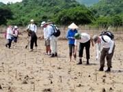 """Programme de plantation de """"mangroves de l'amitié"""" Vietnam-Japon"""