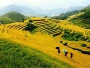 Ouverture de la Semaine culturelle, sportive et touristique de Mu Cang Chai
