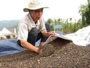 Le Vietnam a exporté 112.000 tonnes de poivre en neuf mois