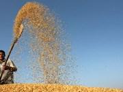 FAO : Production céréalière mondiale en hausse de 8%