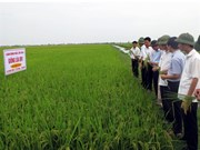 """Vague de transferts des """"droits d'auteur"""" de variétés agricoles"""
