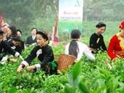 """Ouverture du concours des """"Bourgeons de thé d'or"""" à Thai Nguyen"""