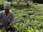 Le Carnaval et la fête de la culture du thé à Thai Nguyen