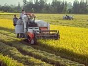 Belles perspectives pour l'agriculture du Vietnam, selon BMI