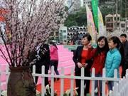 Fête de la cerise prévue mi-mars à Ha Long