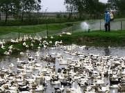 La grippe aviaire confirmée dans 21 villes et provinces