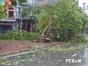 Télégramme officiel sur le règlement des conséquences du typhon Rammasun