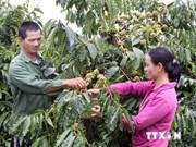 Tay Nguyen: essor socioéconomique rime avec mécanismes et politiques spécifiques