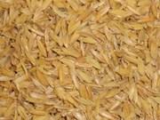 La balle de paddy, nouvelle matière première pour la production de bois
