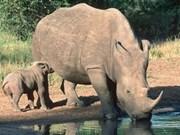 Des élèves vietnamiens au Sommet mondial du rhinocéros de la jeunesse