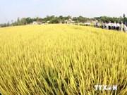 L'ASEAN+3 coopère dans l'agriculture et la sylviculture