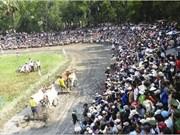 Course de bœufs des Khmers : une fête unique