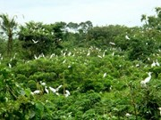 Le jardin aux aigrettes de Bang Lang, attraction de Cân Tho