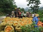 La FAO salue les succès du Vietnam dans la lutte contre la pauvreté