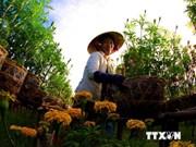 Dong Thap coopère avec le Japon dans le développement agricole