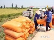 Le Vietnam et l'Irlande coopèrent dans l'agriculture