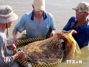 Delta du Mékong : mesures pour un développement durable de l'aquaculture