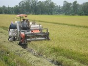 Delta du Mékong : nécessité de restructurer l'agriculture