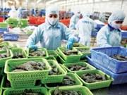 Crevettes: 3,8 milliards de dollars d'exportations prévus cette année