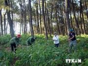 Le Vietnam développe les forêts à usage spécifique