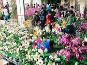 Hanoi : les rues s'animent à l'arrivée du Têt
